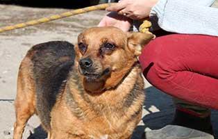 aufnahmepatenschaft-huendin-8-Jahre Wir suchen Aufnahmepaten für 7 Hunde aus polnischem Tierheim