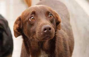 aufnahmepatenschaft-ruede-2-Jahre Wir suchen Aufnahmepaten für 7 Hunde aus polnischem Tierheim