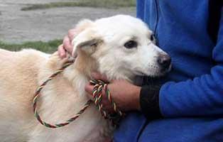 aufnahmepatenschaft-ruede-3-Jahre Wir suchen Aufnahmepaten für 7 Hunde aus polnischem Tierheim