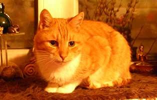 gluecklich-vermittelt-katze-goldi Petra braucht ihr Kissen