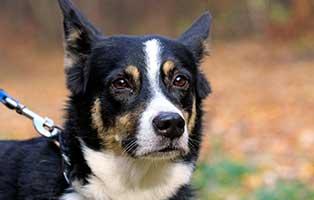 gluecklich-vermittelt-purzel Glücklich vermittelt - Tiere haben ein Zuhause