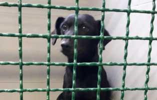 hündin1-polnisches-tierheim Aufnahmepatenschaft für Auslandshunde
