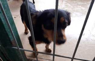 hündin3-polnisches-tierheim Aufnahmepatenschaft - 5 Hunde aus Polen