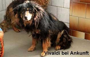 huendin-vivaldi-neuigkeiten-ankunft Tierische Geschichten - Lustiges und spannendes
