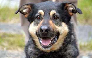 hund-hasso-verstorben Trauriges - wenn ein Tier die Regenbogenbrücke überquert