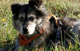 hund-hutch-gluecklich-vermittelt Tierische Geschichten - Lustiges und spannendes