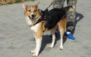 hund-smeura-albert Aufnahmepatenschaft - 6 Hunde aus der Smeura
