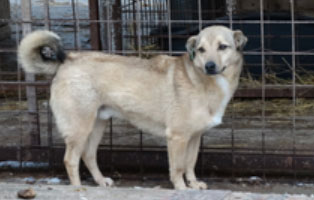 hund-smeura-amethist Aufnahmepatenschaft - 6 Hunde aus der Smeura