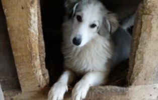 hund-smeura-anabela Aufnahmepatenschaft - 6 Hunde aus der Smeura