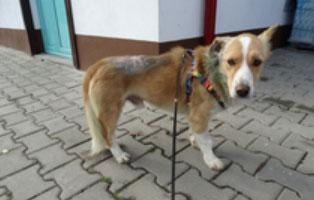 hund-smeura-bitten Aufnahmepatenschaft - 6 Hunde aus der Smeura