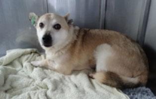 hund-smeura-cai Aufnahmepatenschaft - 6 Hunde aus der Smeura
