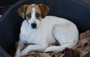 hund-smeura-zuzi Aufnahmepatenschaft - 6 Hunde aus der Smeura