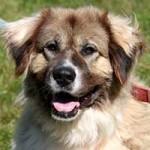 hund-ursel-verstorben-150x150 Ursel – in Gedenken an diese starke Hündin