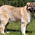 hund-ursel-verstorben-leine-150x150 Ursel – in Gedenken an diese starke Hündin
