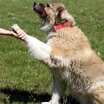 hund-ursel-verstorben-pfote-150x150 Ursel – in Gedenken an diese starke Hündin