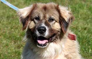 hund-ursel-verstorben Ursel – in Gedenken an diese starke Hündin