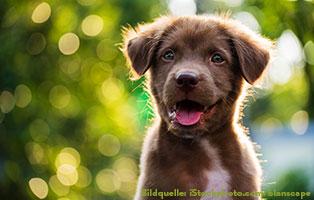 hunde-katzen-ratgeber-sprechen Hunderatgeber