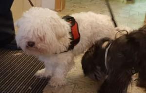 hunde-teddy-flocke-unfall-freunde-300x191 Teddy und Flocke verstehen die Welt nicht mehr