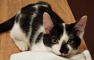 katze-isa-gluecklich-vermittelt-tisch Hannes & Harry - Glückliche Katzenbande