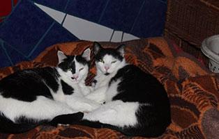 katzen-conny-malo-gluecklich-vermittelt Glücklich vermittelt - Katzenstation München