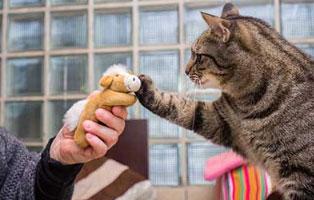 katzen-ratgeber-erziehung Wie erziehe ich meine Katze?