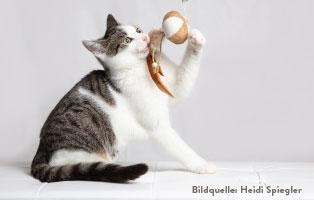 katzen-ratgeber-spielzeug-1 Katzenratgeber