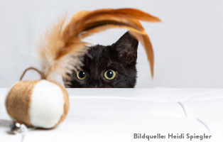katzen-ratgeber-spielzeug Katzenratgeber
