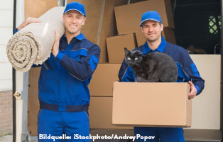 katzen-ratgeber-umzug Katzenratgeber