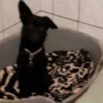 polenhund-huendin2-150x150 Wir suchen Aufnahmepaten für 7 Hunde aus polnischem Tierheim