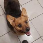 polenhund-huendin3-150x150 Wir suchen Aufnahmepaten für 7 Hunde aus polnischem Tierheim