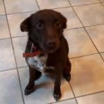polenhund-ruede2-150x150 Wir suchen Aufnahmepaten für 7 Hunde aus polnischem Tierheim