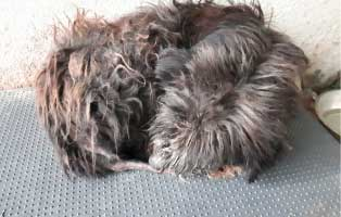 rüde1-polnisches-tierheim Aufnahmepatenschaft - 5 Hunde aus Polen