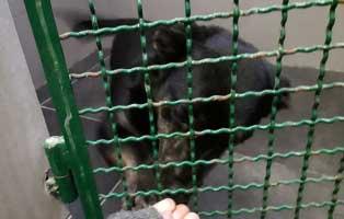 rüde2-polnisches-tierheim Aufnahmepatenschaft - 5 Hunde aus Polen