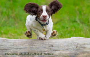 ratgeber-hunde-agility Agility für Hunde