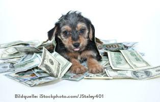 ratgeber-hunde-kosten Wie viel kostet ein Hund?