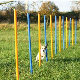 ratgeber-hunde-produkt-agility Agility für Hunde