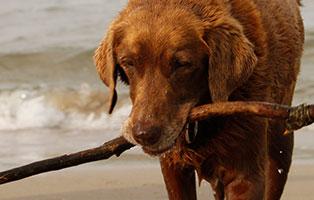 ratgeber-hunde-strandurlaub Winterurlaub mit Hund - auf zum Hundestrand!