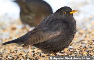 ratgeber-kleintiere-wildvoegel-füttern Wildvögel ganzjährig füttern