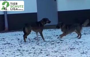 tommykaja-zuhause-gesucht Aktuelles - Tierheim Unterheinsdorf