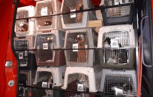 26-polenhunde-ueberführung-van Aufnahmepatenschaft für Auslandshunde