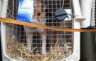 6-hunde-smeura-unterheinsdorf-überführung 6 Hunde aus der Smeura sind in Unterheinsdorf angekommen