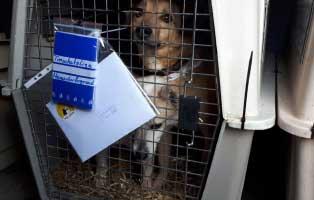 6-hunde-smeura-unterheinsdorf-ankunft 6 Hunde aus der Smeura sind in Unterheinsdorf angekommen