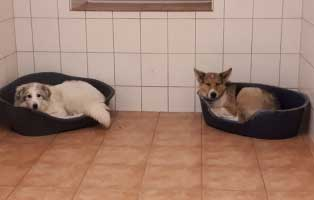 6-hunde-smeura-unterheinsdorf-keorbchen Gnadenhof Riedelsbach