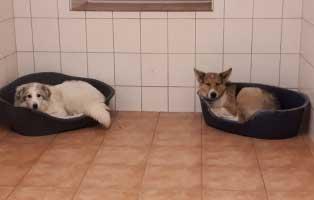 6-hunde-smeura-unterheinsdorf-keorbchen Tierheim Unterheinsdorf