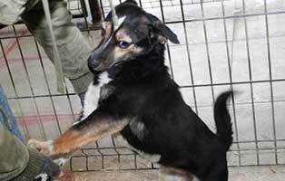 Huendin-01-2-Jahre-februar-2019 26 polnische Hunde sollen gerettet werden - Teil I