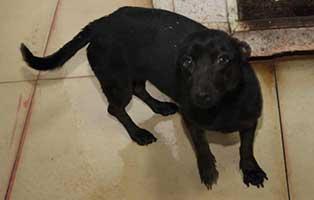 Huendin-02-5-Jahre-februar-2019 26 polnische Hunde sollen gerettet werden - Teil I