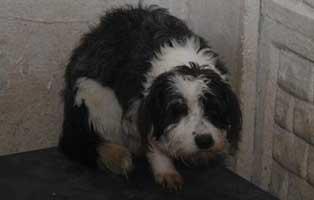 Huendin-03-5-Jahre-februar-2019 26 polnische Hunde sollen gerettet werden - Teil I