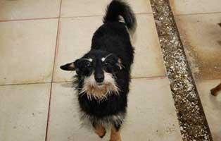 Huendin-04-5-Jahre-februar-2019 26 polnische Hunde sollen gerettet werden - Teil I