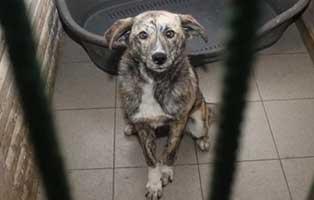 Huendin-05-1-Jahr-februar-2019 26 polnische Hunde sollen gerettet werden - Teil I