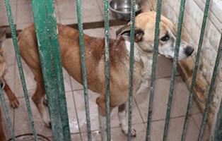 Huendin-06-5-Jahre-februar-2019 26 polnische Hunde sollen gerettet werden - Teil II